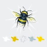Чертеж шмеля Комплект искусства насекомых Ручная работа Взгляд сверху Стоковая Фотография RF