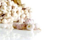 Чеснок в белой предпосылке Стоковые Фото