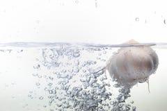Чеснок в воде Стоковое Изображение