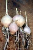 чеснок органический Стоковые Фотографии RF