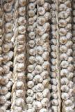 чеснок шариков Стоковое Изображение RF