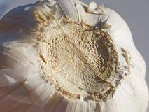 чеснок Стоковое Изображение RF