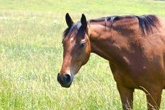 четверть лошади стоковая фотография