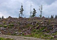 Четкий лес Стоковая Фотография RF