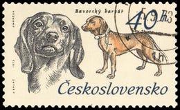 ЧЕХОСЛОВАКИЯ - ОКОЛО 1973: штемпель, напечатанный в Чехословакии, показывает баварский bloodhound горы Стоковая Фотография RF