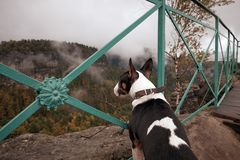 Чех Швейцария богемские Швейцария или национальный парк Ceske Svycarsko Собака щенка sightseeing туманный ландшафт стоковые фото