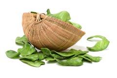 Чечевицы, ежегодные травы, Jing болезненное-sheng, дольки lanceolate, Стоковые Фотографии RF