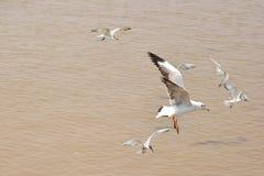 Челка Phu птицы Стоковая Фотография RF