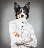 Человек бизнесмена с головой собаки стоковое изображение rf