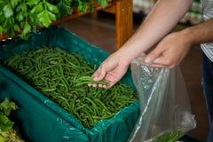 Человек выбирая зеленые фасоли в органическом разделе Стоковая Фотография
