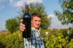 Человек в винограднике стоковое изображение rf