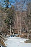 Человек в лесе 13 зимы Стоковое Фото