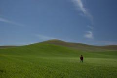 Человек в поле в холмах Palouse Вашингтона стоковая фотография rf