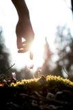 Человек в саде весны Стоковые Изображения RF