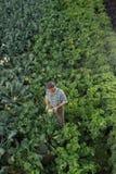 Человек держа голову брокколи в поле листовой капусты Стоковые Изображения RF