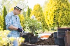 Человек засаживая бак на саде стоковая фотография