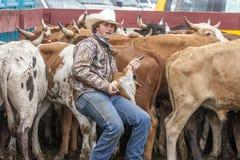 Человек имеет быка рожками Стоковые Фото