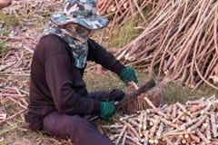 Человек используя нож к прерванному дереву кассавы Стоковые Изображения