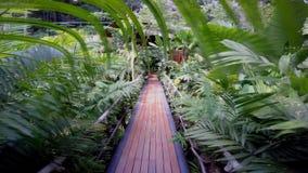 Человек идет на мост к хате в джунглях сток-видео