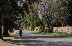 Человек идет домой от работы в дерев-выровнянной улице Стоковые Фотографии RF
