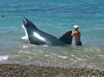 Человек идет с акулами мистификации в воде вдоль пляжа в Сочи Стоковое фото RF