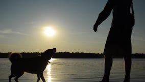 Человек и собака играя на пляже видеоматериал