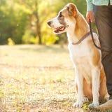 Человек и собака outdoors Стоковая Фотография RF