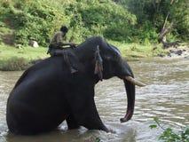 Человек и слон Стоковые Изображения RF