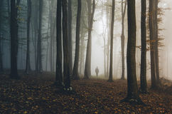 Человек идя в лес осени фантазии Стоковое Изображение RF