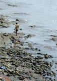 Человек идя вдоль пляжа Стоковые Фотографии RF