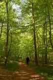 Человек идя собака в лесе Стоковая Фотография