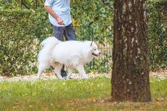 Человек идя с собакой внешней Стоковые Фотографии RF