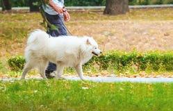 Человек идя с собакой внешней Стоковые Фото