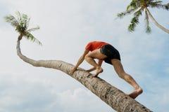 Человек карабкается на пальме, теле спорт стоковое фото