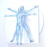 Человек Леонардо Да Винчи Vitruvian и женщина, пара иллюстрация вектора