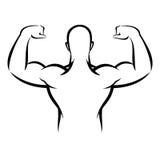 Человек мышцы бесплатная иллюстрация