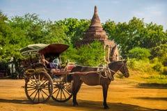 Человек Мьянма Бирма лошади экипажа Стоковая Фотография RF