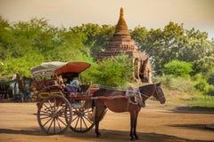 Человек Мьянма Бирма лошади экипажа Стоковое Изображение RF