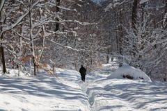 Человек на прогулке на пути в лесе зимы маленьких прикарпатских холмов Стоковые Фото