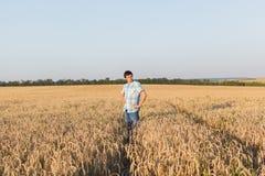 Человек на пшеничном поле Стоковые Изображения