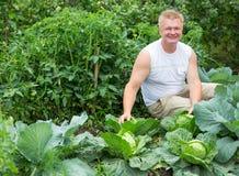 Человек показывает сбор капусты Стоковые Фотографии RF