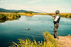 Человек постаретый серединой удит уловленные розовые семг от реки Стоковое Изображение