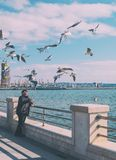 Человек подает птицы Чайки на обваловке Стоковое Фото