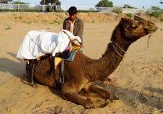 Человек при верблюд лежа на песке Стоковые Изображения