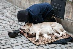 Человек при собака умоляя на Карловом мосте Стоковое Изображение RF