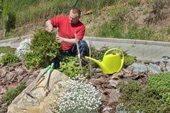 Человек работая в саде, летний день Стоковая Фотография RF