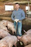 Человек работая на скотном дворе Стоковое фото RF