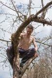 Человек сидит на дереве и пилить ветвь Стоковое Фото