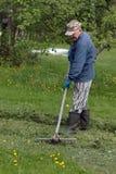 Человек собирает грабл травы стоковое фото