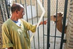Человек с верблюдом в зоопарке Tozeur Стоковые Фото